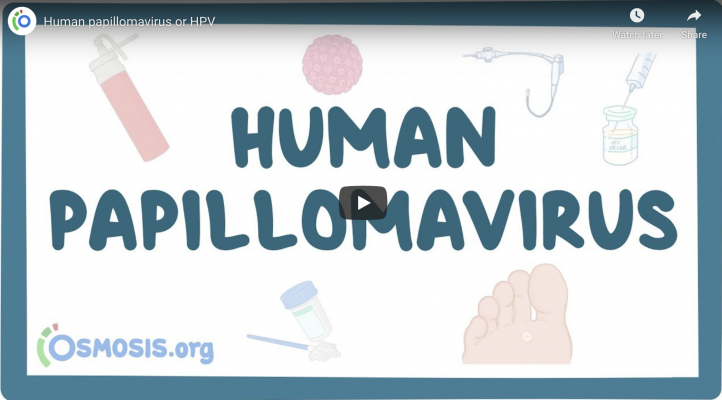 what is hpv